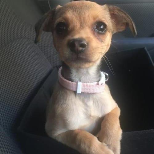 Stella - Mixed Breed Dog