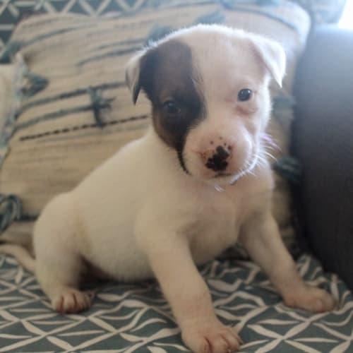 Kalila - Mixed Breed Dog