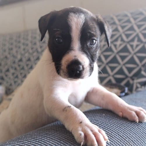 Arabella - Mixed Breed Dog