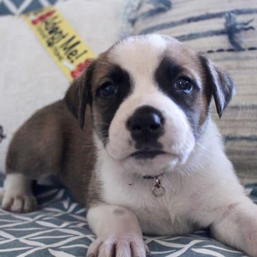 Amory - Mixed Breed Dog