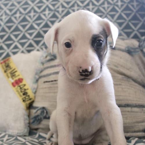 Reagan - Mixed Breed Dog