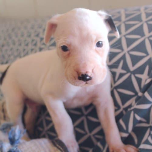 Coran - Mixed Breed Dog