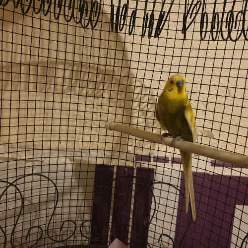 Alan-A-Dale -  Bird