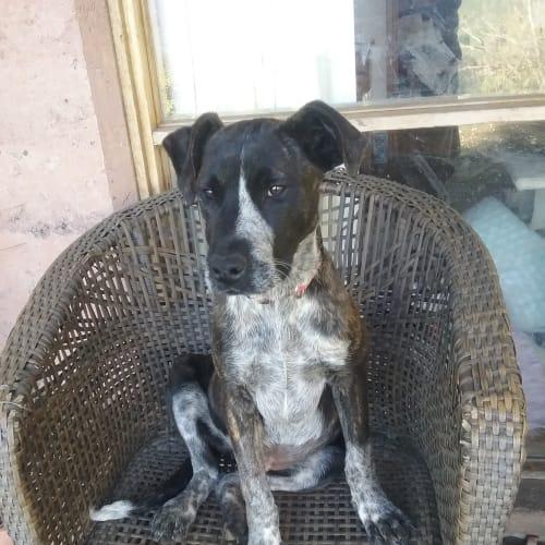 Xena - Mixed Breed Dog