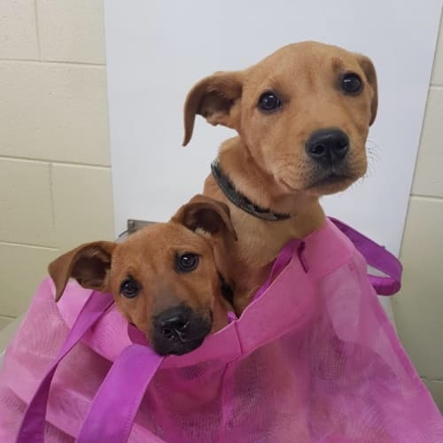 Bonnie and Clyde - Mixed Breed Dog