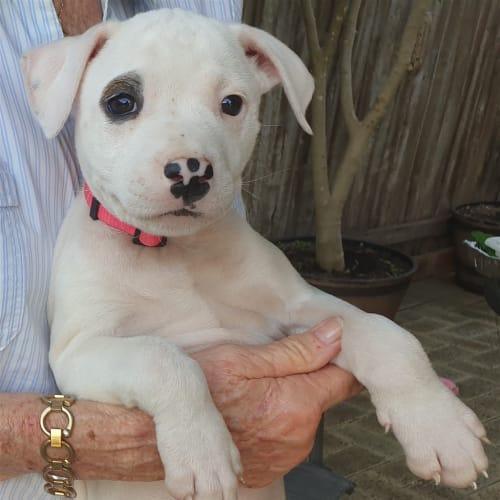 Nadia - Medium Mixed Breed Dog