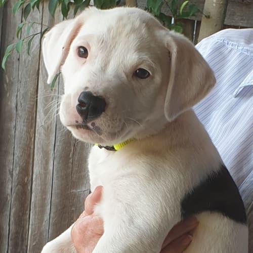 Nacho - Medium Mixed Breed Dog