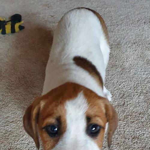 Kimmie - Mixed Breed Dog