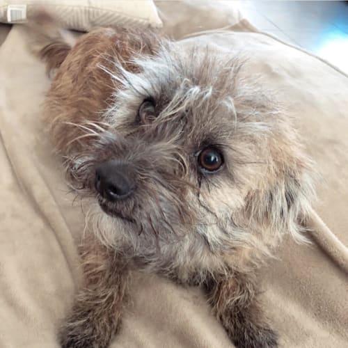 Coco - Mixed Breed Dog