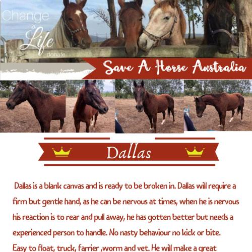 Dallas -  Horse
