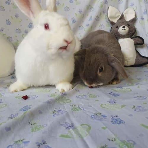 Lewis and Kali - New Zealand White Rabbit