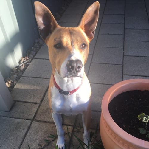 Chester - Mixed Breed Dog