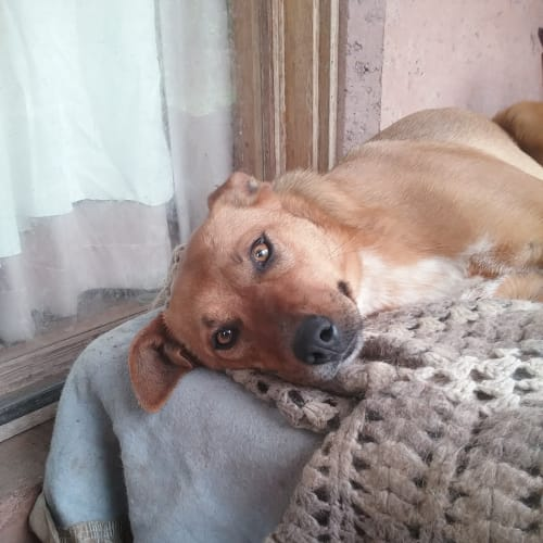 Taylor - Mixed Breed Dog