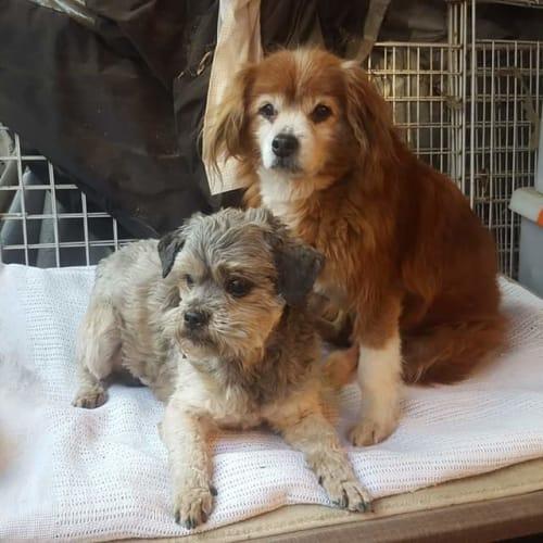 Benji & Fluffy