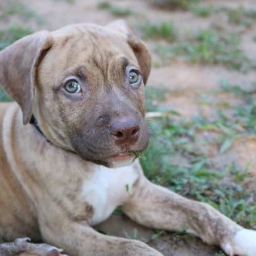 Gus-Gus - Mixed Breed Dog