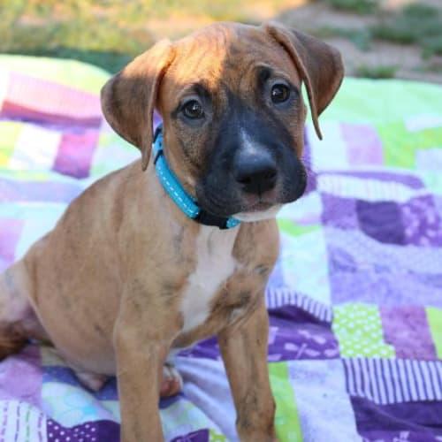 Tucker - Mixed Breed Dog