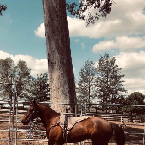 Vixen -  Horse