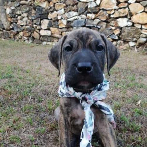 Rocky - Mixed Breed Dog
