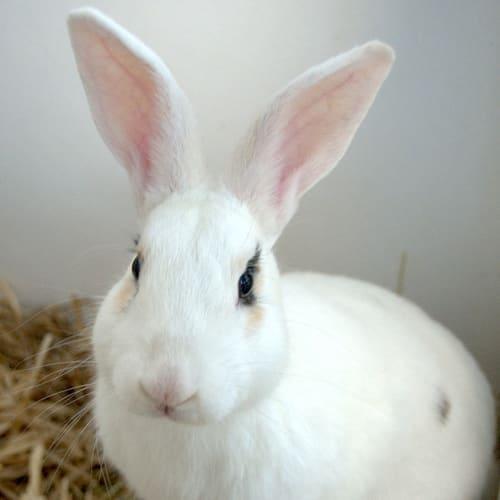 Rupert -  Rabbit