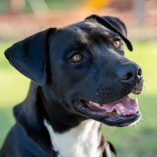 Alex - Mixed Breed Dog