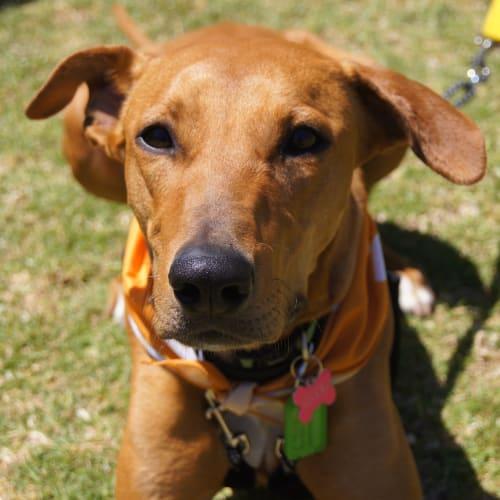 Aiyana DL2228 - Mixed Breed Dog