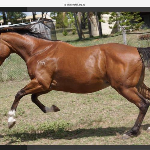 Athena -  Horse