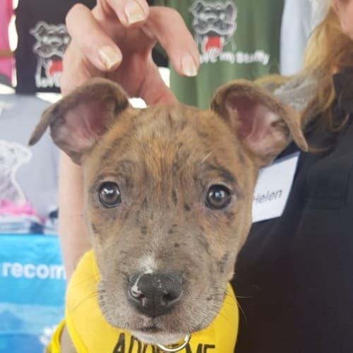 Athena - Mixed Breed Dog