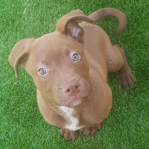 Terrico D0094 - Mixed Breed Dog