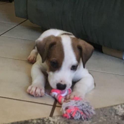 Aiden - Mixed Breed Dog