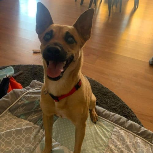 Maple - Mixed Breed Dog