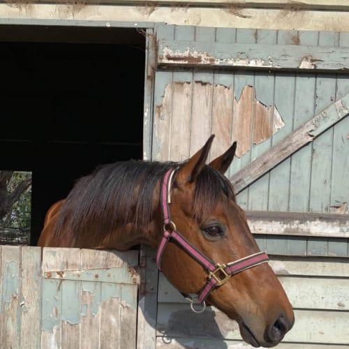 Meshindi -  Horse