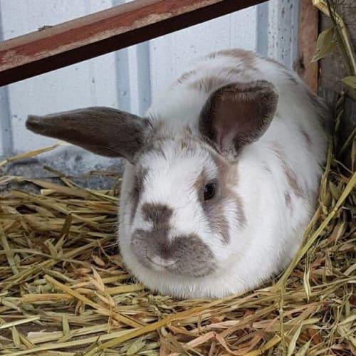 Robin - Bunny Rabbit