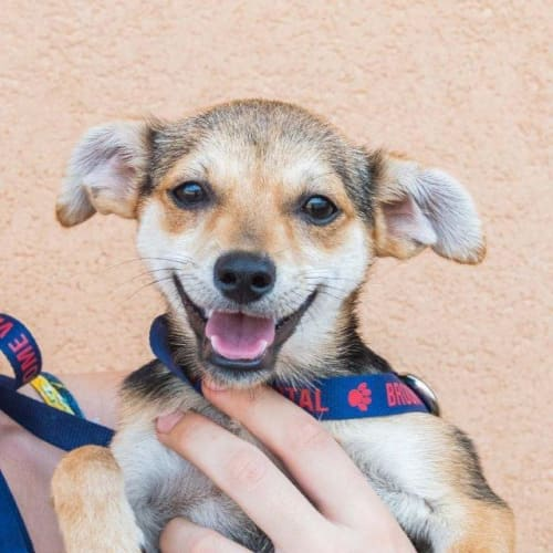 Chichi - Mixed Breed Dog
