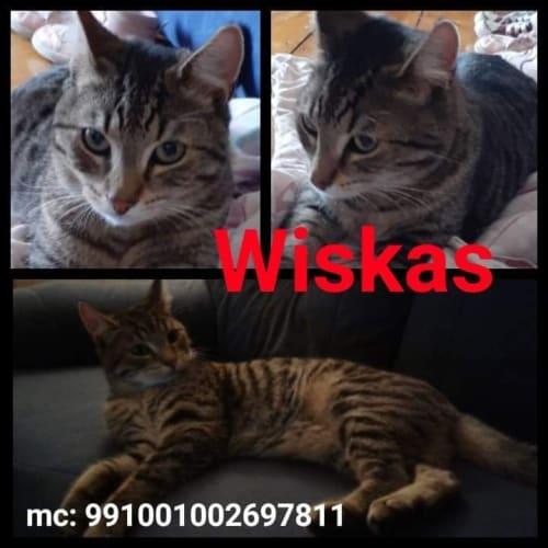 Wiskas - Moggie Cat