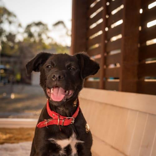 April - Border Collie x Cattle Dog