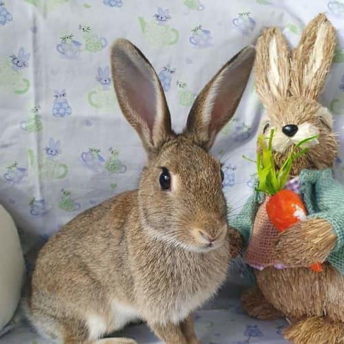Charli - Bunny Rabbit