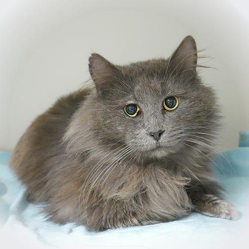Gregory SUA004381 - Domestic Medium Hair Cat