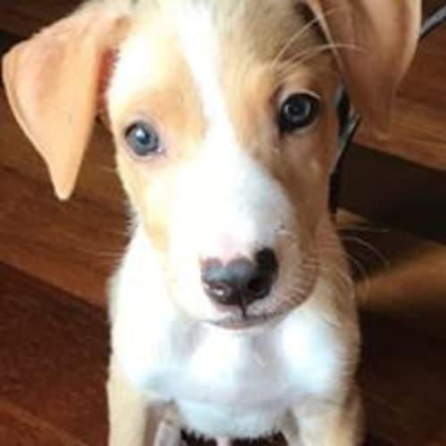 Hadley - Mixed Breed Dog