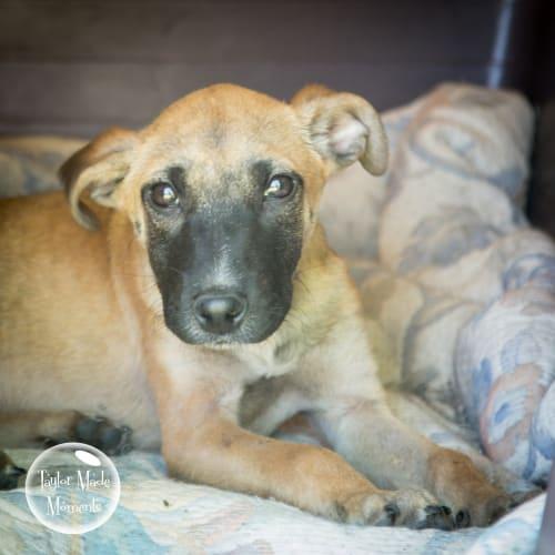 Takoda - Mixed Breed Dog