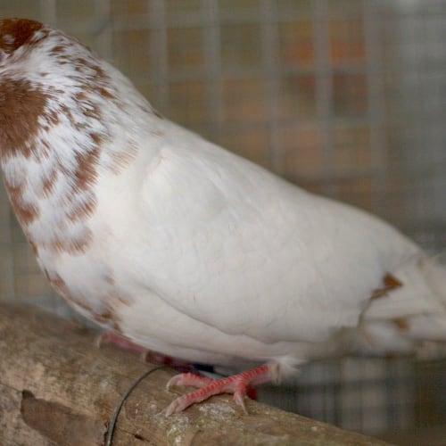 Venus -  Bird