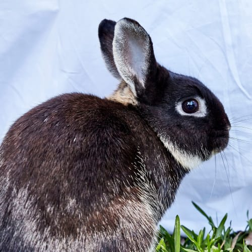 Wilden -  Rabbit