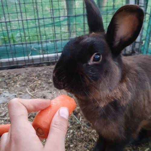 Milo -  Rabbit