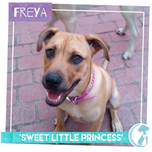 Freya - Mixed Breed Dog