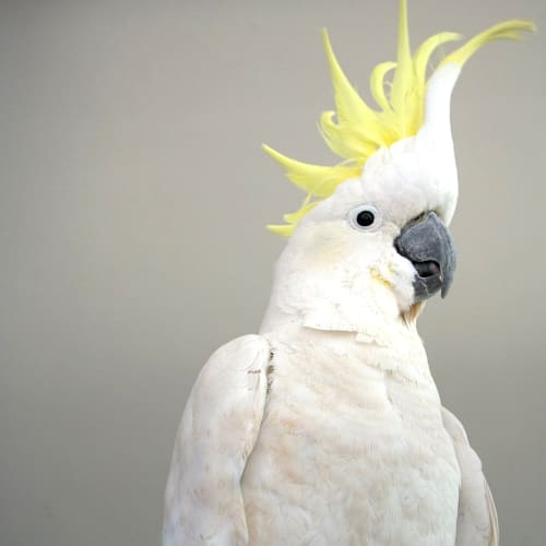 George -  Bird (Wildlife)