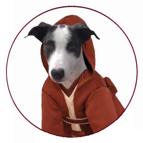 Obi - Bull Arab x Kelpie Dog