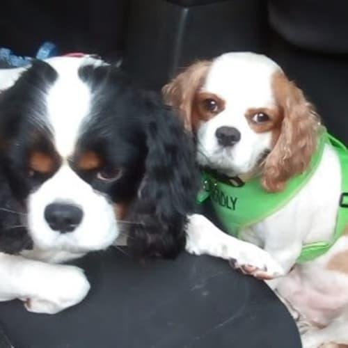 Bailey and Olly