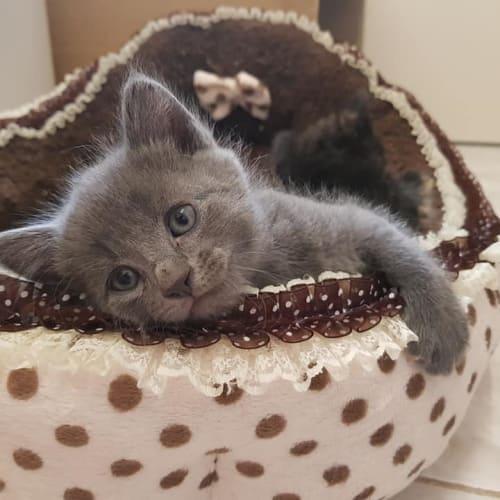 Harry - Processing Applications! - Domestic Short Hair Cat