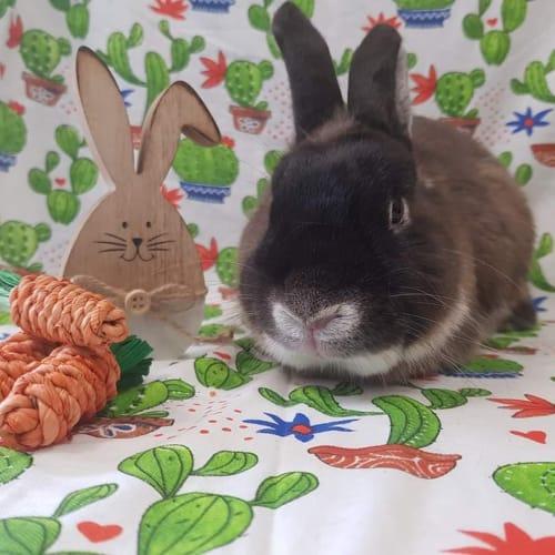 Lenny -  Rabbit