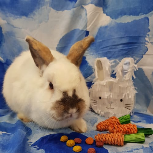 Edmond -  Rabbit