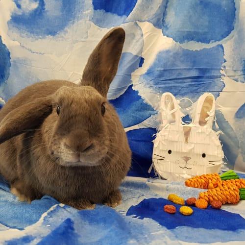 Dusty -  Rabbit